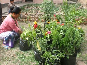 Garden plants donated and planted by Children of Asia volunteers